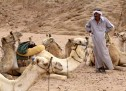 What to do if you're sitting on the back of a camel and you need to pee.
